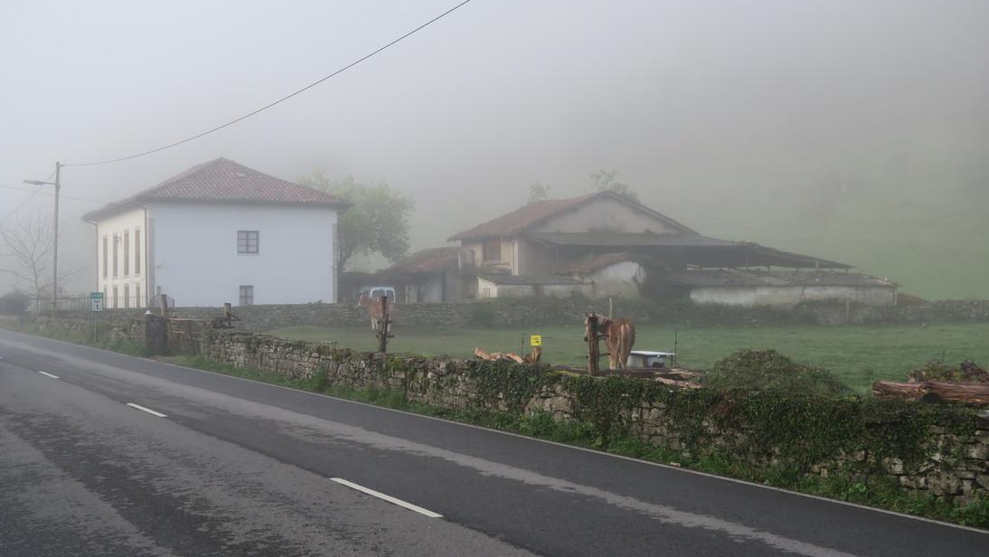 Niebla y caballos en una aldea de Cangas de Onís.