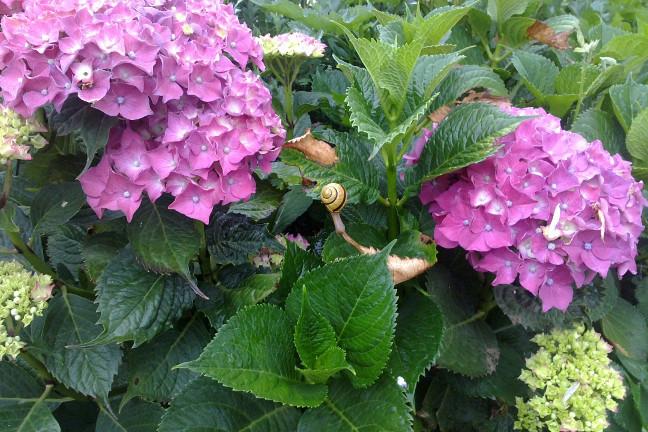 Caracol y flores