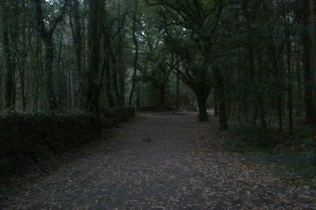 Bosque y Santa Compaña