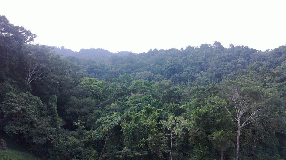Selva de Palenque