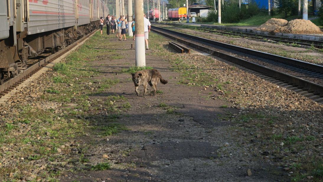 Perro en la estación de Ерофе́й Па́влович (Yerofey Pavlovich).